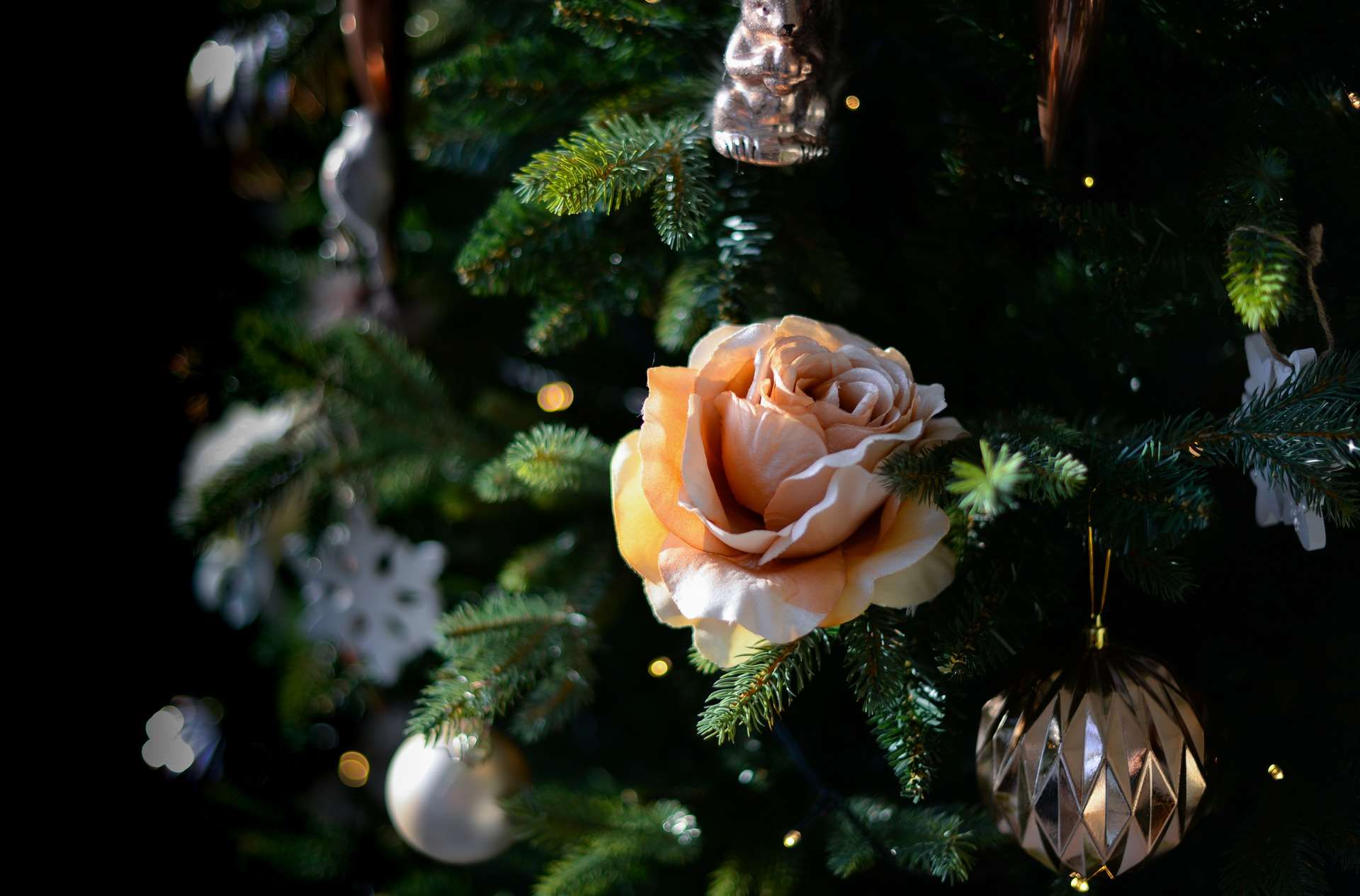 White rose used as a decoration in a christmas tree